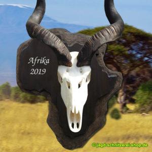 Trophäenschild-Trophäenbrett-Afrika-Kudu