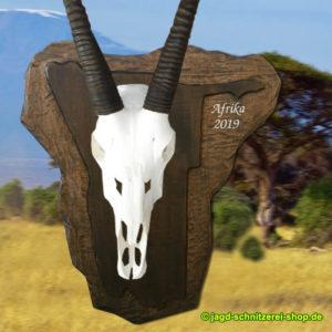 Trophäenschild-Trophäenbrett-Namibia-Oryx